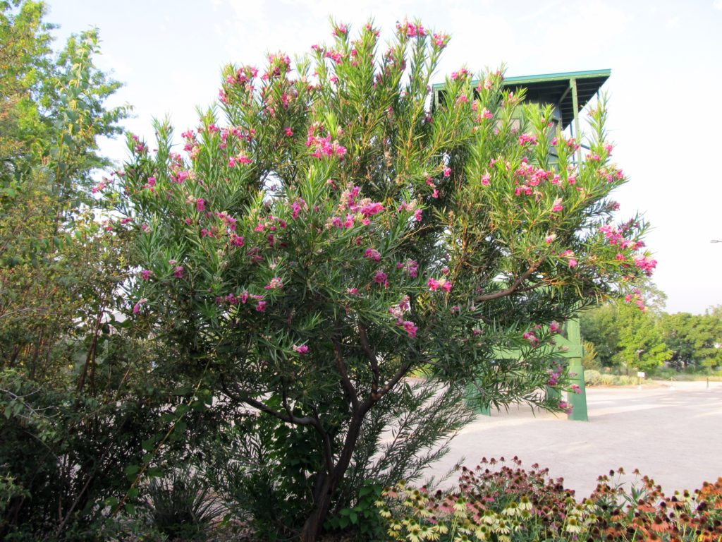 Flowering and Colorful – La Tejana Trees